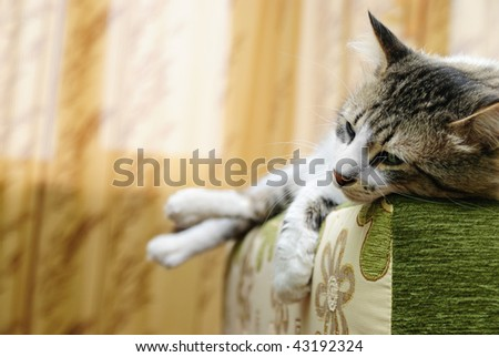 The striped cat sleeps on a sofa - stock photo