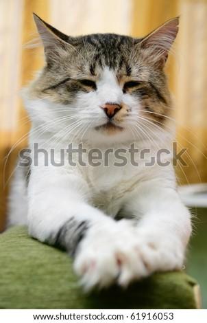 The striped cat sleeps on a sofa - stock photo
