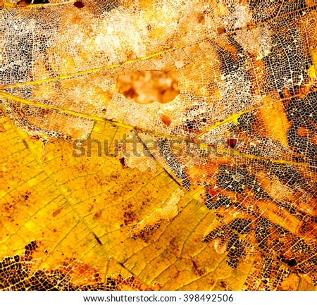 The structure of a large leaf of a tree, old leaf closeup with veins, white net of veins in leaf, yellow leaf with net of veins, autumn leaf, fall season leaf, bright yellow leaf on the ground - stock photo