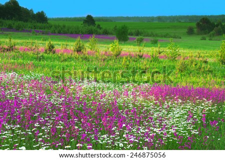 the summer  landscape with  flowers on a meadow and  sunset - stock photo