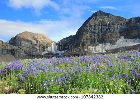 The summit of mount Timpanogos, Utah, above a meadow of beautiful wildflowers. - stock photo
