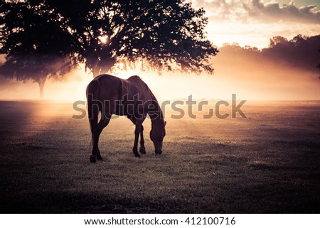 The sun crept into the sky, through the trees, on this beautiful sunrise and lit the mist on fire. The horse appeared to enjoy the show as much as I did.