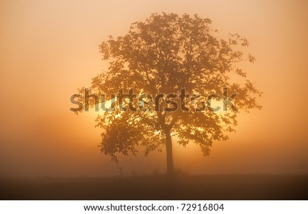 the sun goes up behind an isolated tree