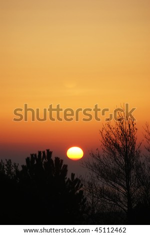 The sun just rising over the sea with trees in the foreground - stock photo