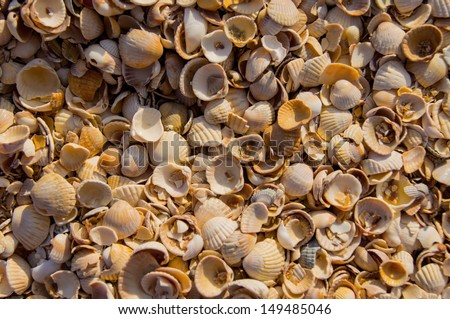 The sun rises on a pile of shells - stock photo