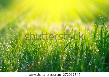 The sun's rays from above and green grass. Natural composition - stock photo