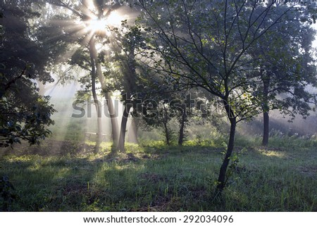 The sun's rays in the forest. Ukrainian forest in the morning - a unique spectacle. Certainly each of us has been in a variety of woods, whether coniferous or deciduous. - stock photo