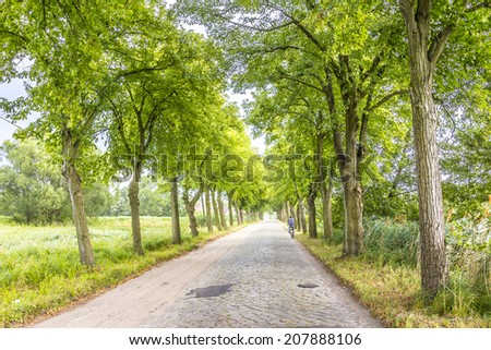 The sun shines brightly into the green avenue trees, while dark clouds are coming up. A single cyclist is driving along the alley. (unrecognizable person) - stock photo