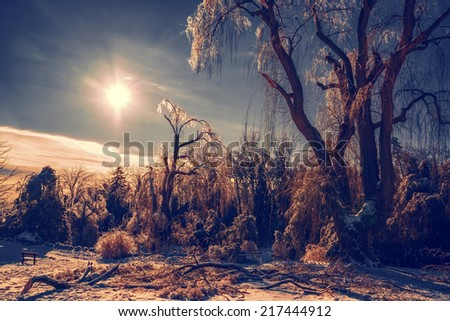 The sun shines casts an orange glow on a frozen park landscape with ice covered trees and branches.  Some large tree branches are broken on the ground.  Filtered for a retro, vintage look.  - stock photo