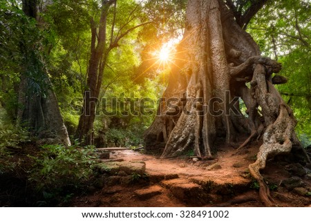 The sun shines through the jungle canopy in Siem Reap, Cambodia.