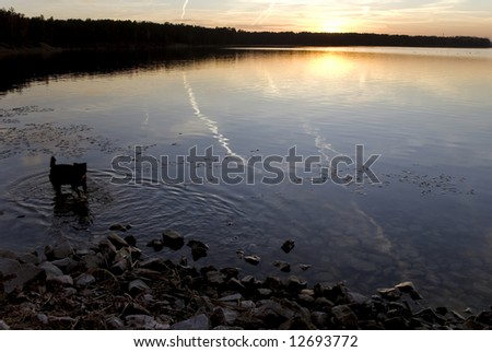 The sun shining on horizon behind clouds and dog in the water - stock photo