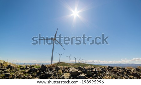 The sun shining over a plethora of windmills.