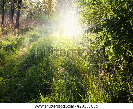 The sun through trees. - stock photo