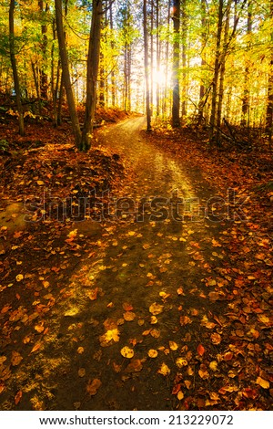 The sunlight shines through the trees beyond a path which lies in an forest during the fall season.  - stock photo