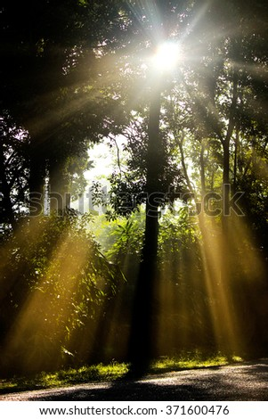 The Sunlight Through the Trees