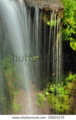 The swamp of the fresh green - stock photo