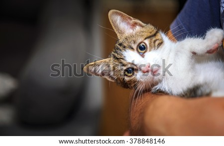 The Sweet Little Baby Cat on Hug - stock photo