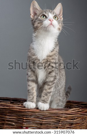 the sweetest kitten - standing in a basket - stock photo