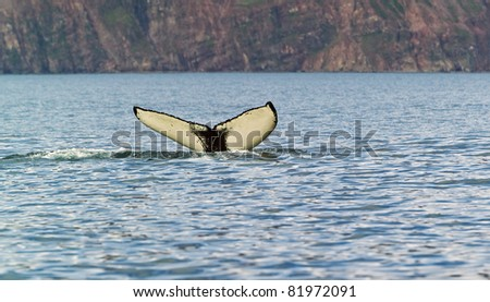 The tail of a whale over water like a butterfly, Iceland - stock photo