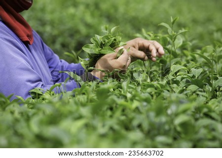 The tea in the morning - stock photo
