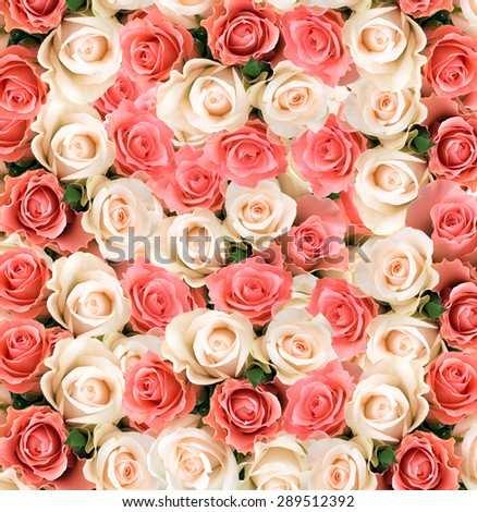 The texture of a plurality of of roses - stock photo