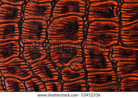 the texture of crocodile skin - stock photo