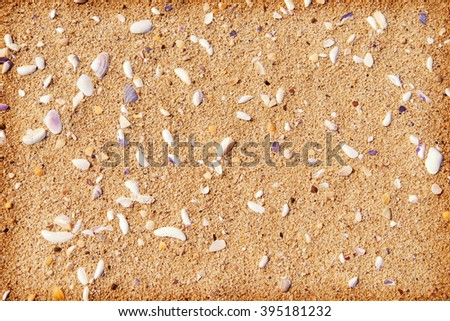 The texture of sand on the beach with shells background