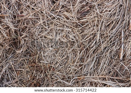 The texture of the dried herb gray. Cut grass, hay. Photo. - stock photo