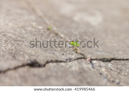 The texture of the old cracked asphalt close-up. Grass grows from cracks in the road close up macro.  - stock photo