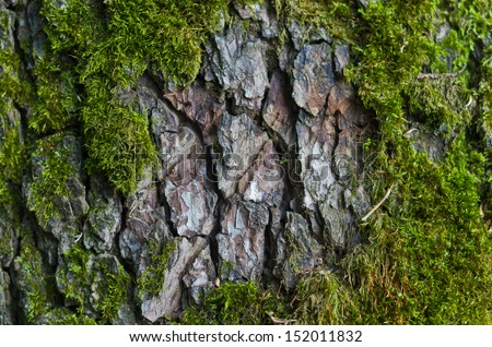 The texture of tree bark with moss - stock photo