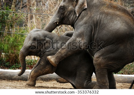 The three members of an elephant family