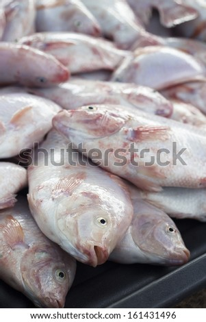 The Tilapia fish (Oreochromis mossambicus) in market. The tilapiines are the very important commercial fish. - stock photo