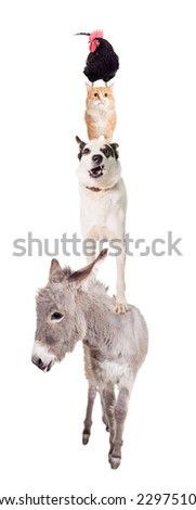 The Town Musicians of Bremen - stock photo