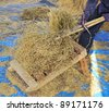 The traditional way of threshing grain in  Thailand. - stock photo