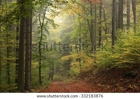 The trail through the autumnal forest. - stock photo