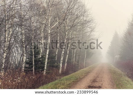 The Trans Canada trail on a foggy november day.  Also know as the Confederation Trail.  It runs the length of Prince Edward Island, Canada. - stock photo