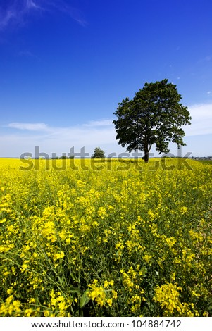 the tree growing on agricultural field. spring - stock photo