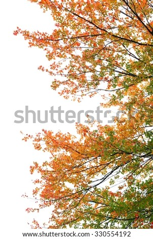 The tree in fall, on a white background - stock photo