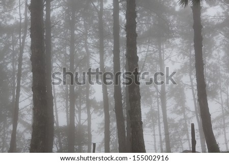 the tree in the fog - stock photo