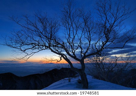 The tree of the morning sun - stock photo