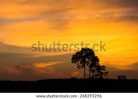 The tree on sunset time is silhouetle style