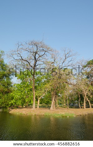 The trees are deciduous autumn in park with clear blue sky - stock photo