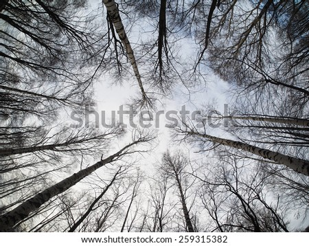 the trees in the forest