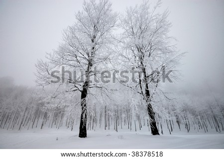 the trees in the winter