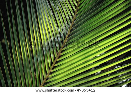 The tropical leaf of a palm lighted the sunlight