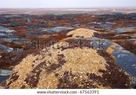 the tundra under the first winter blizzard - stock photo
