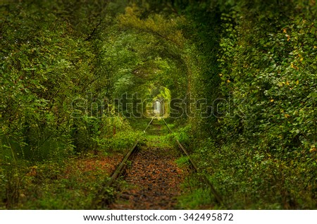 The tunnel of love, Romania. A natural tunnel formed by trees along a rail train in Transylvania.  - stock photo