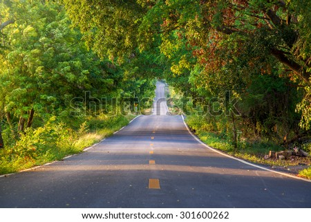 The tunnel of trees and empty road - stock photo