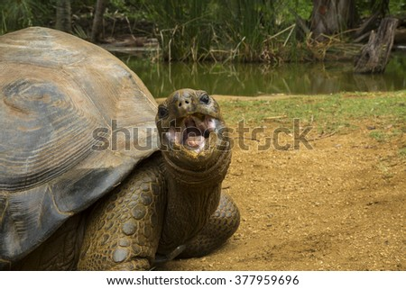 the turtle of mauritius - stock photo