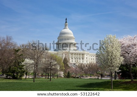 The US Capitol Building on a bright spring day in Washington DC with the cherry trees in bloom